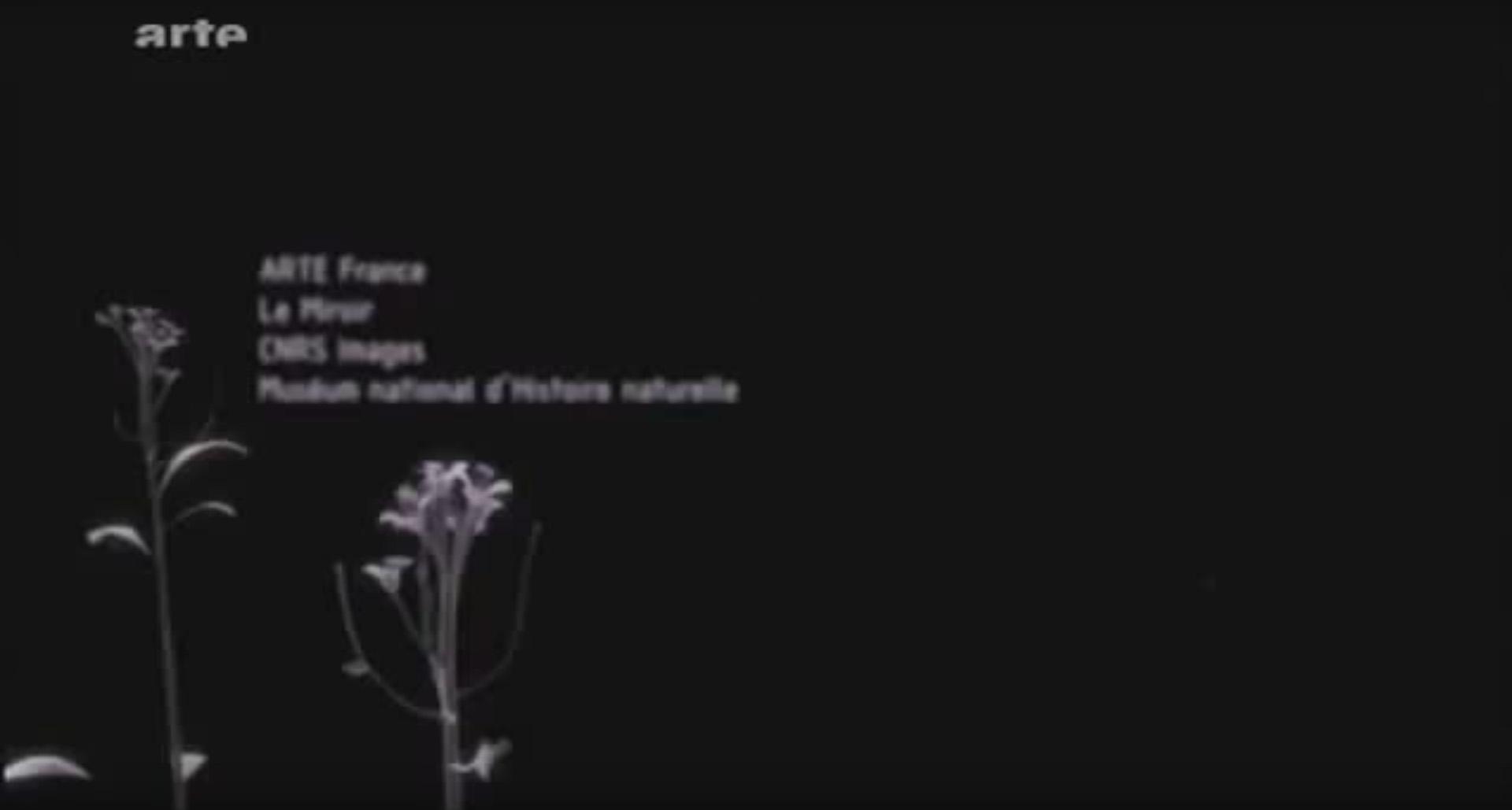 Secrets de plante : l'Ortie